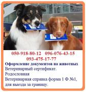 Registration of documents for animals - quick registration. Veterinarian